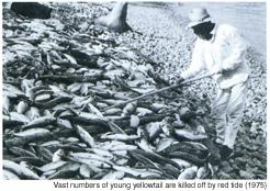 Water Environmental Management in Japan _ History
